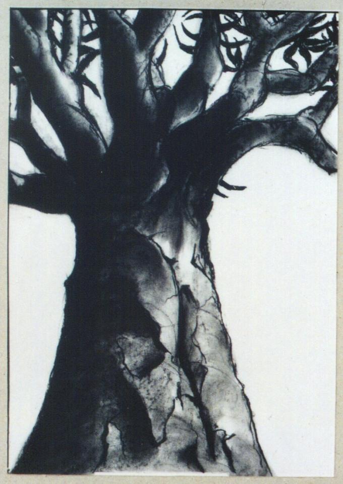 Kokerboom Tree