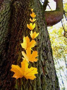 line of leaves IRust