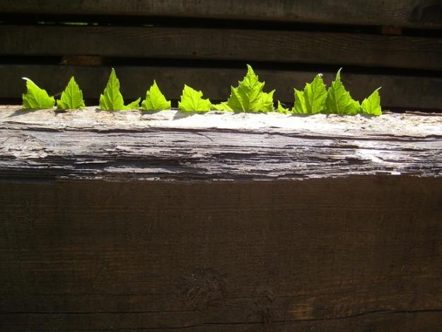 Row of leaves