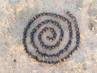 Bokdrol Spiral ©ImkeRust