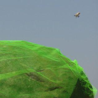 Toxic Rocks - Surprised Bird