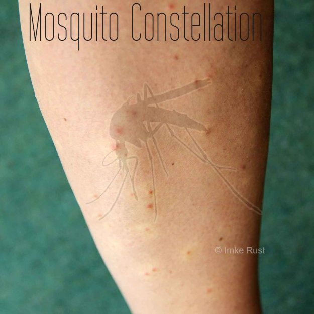 Mosquito Constellation (Digitally manipulated photograph)
