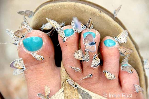 Blue raindrop nails and butterflys attracted by them...