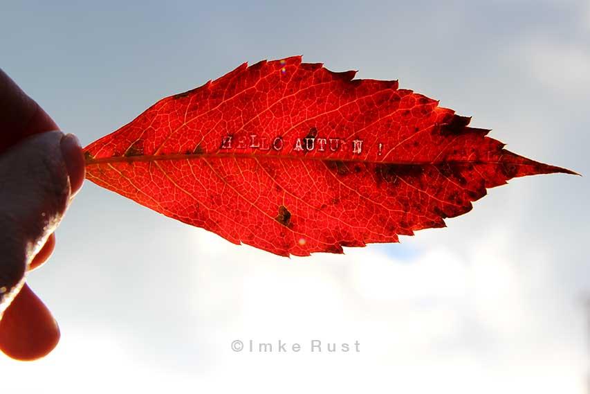 Hello Autumn (leaf work by Imke Rust)