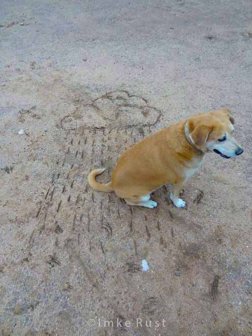 The dog loves sitting in the rain! Drawing a rain cloud with a stick onto the ground at our farm home © Imke Rust