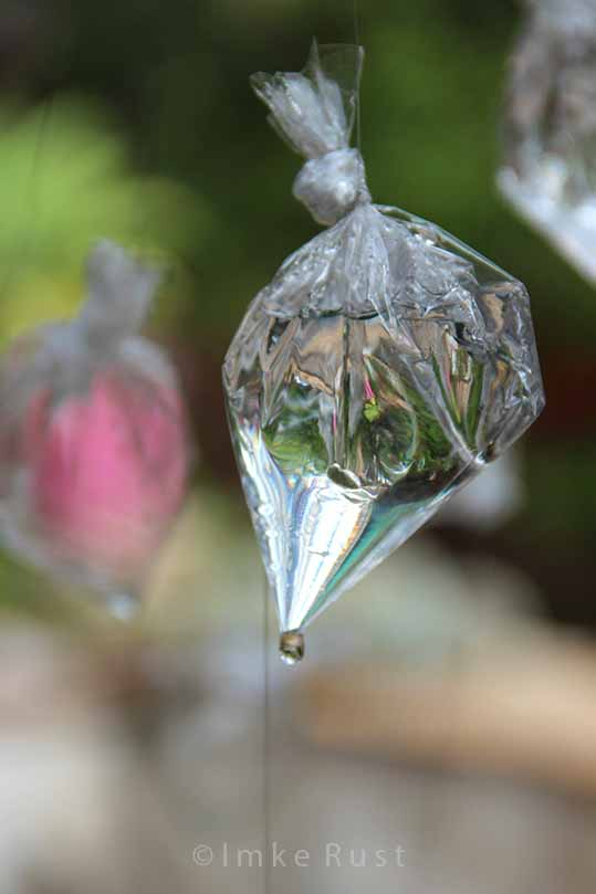 First drip of water escaping from the plastic bag drop © Imke Rust