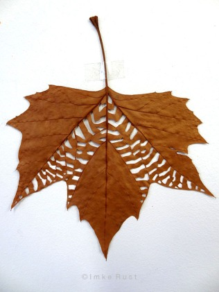 Maple leaf cut-out #4