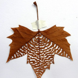 Maple leaf cut-out #3