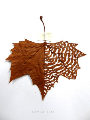Maple leaf cut-out #2