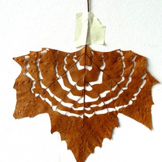 Maple leaf cut-out #1