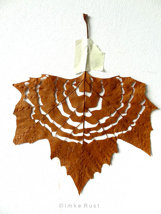 Maple leaf cut-out #1