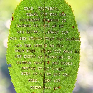 Cherry Leaf Poem (Typed with typewriter)