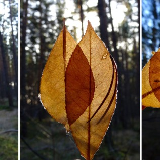 Frozen Leaves Compositions, Sketch in Nature with leaves and sunshine.