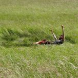 Making a crop circle through rolling his body in the field