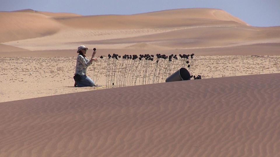 Imke Rust steckt schwarze Rosen in die Wüste in Namibia (Foto: Steffen Holzkamp)