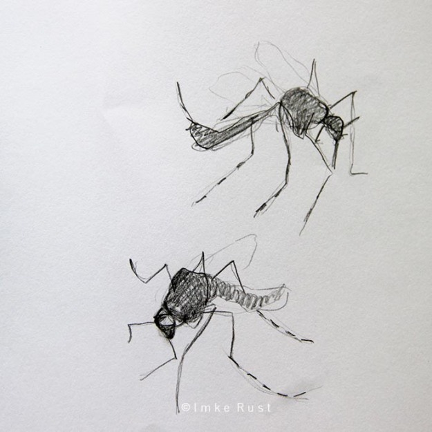 Pencil study of dead mosquitoes