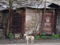 Street dog with tiny houses