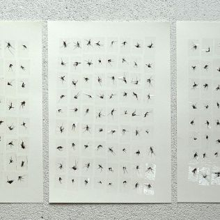 Eine kleine Nachtmusik. Mosquitoes and tape on paper. Each 29x21cm