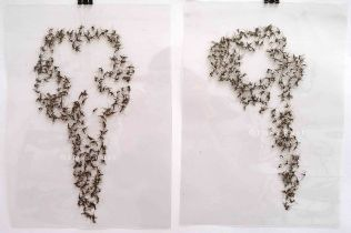 Mozzi Skulls. Mosquitoes and lamination foil.29x21cm